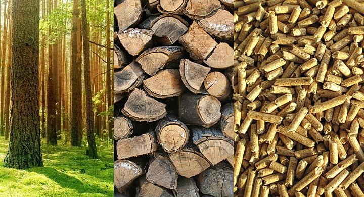 Biomasa, diferentes tipos de biomasa.